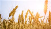 種糧賺錢不能僅靠(kao)漲價